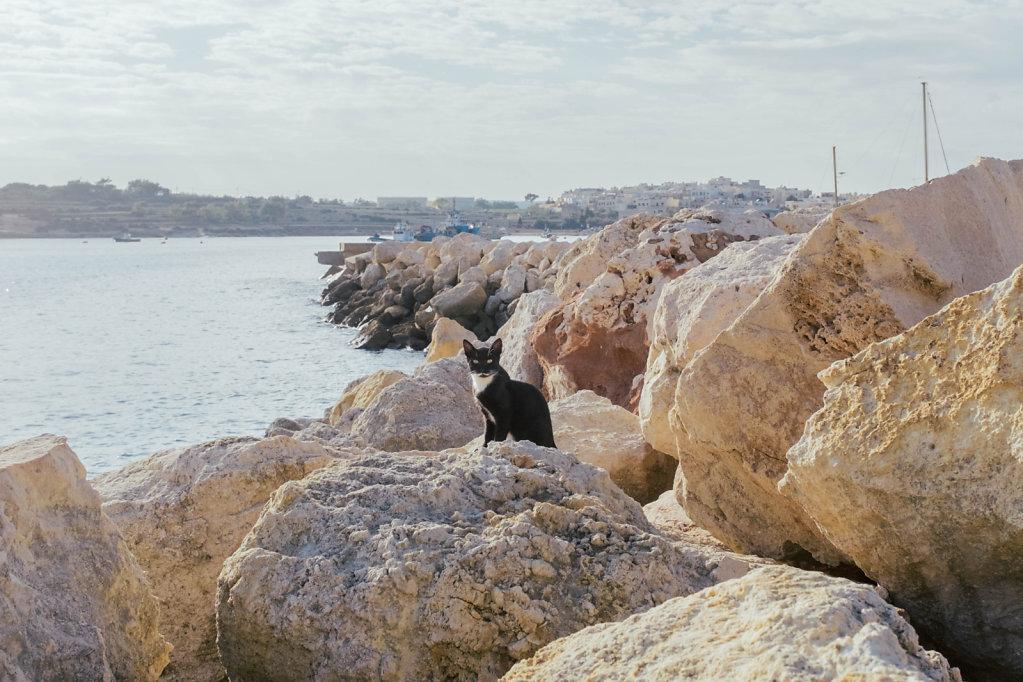 Marsaxlokk Cat